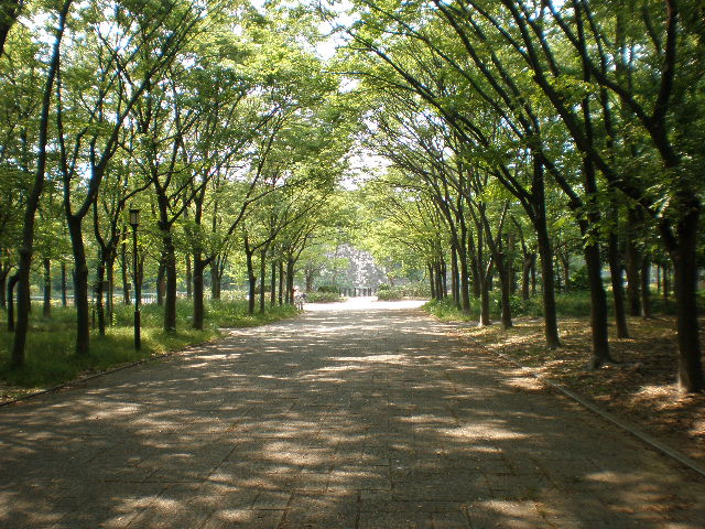 四季の景色が美しい、練習場所横の並木道